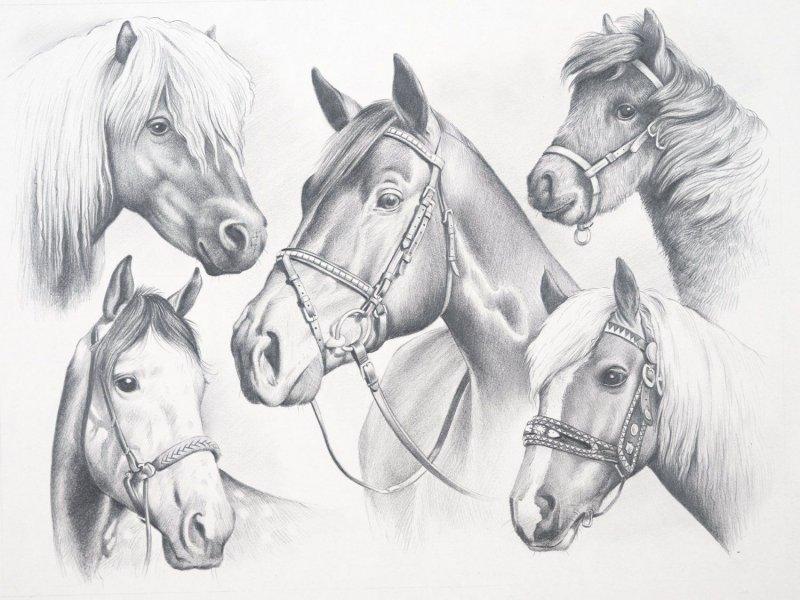 Sketching Skizzieren Malen Mit Bleistift Pferde