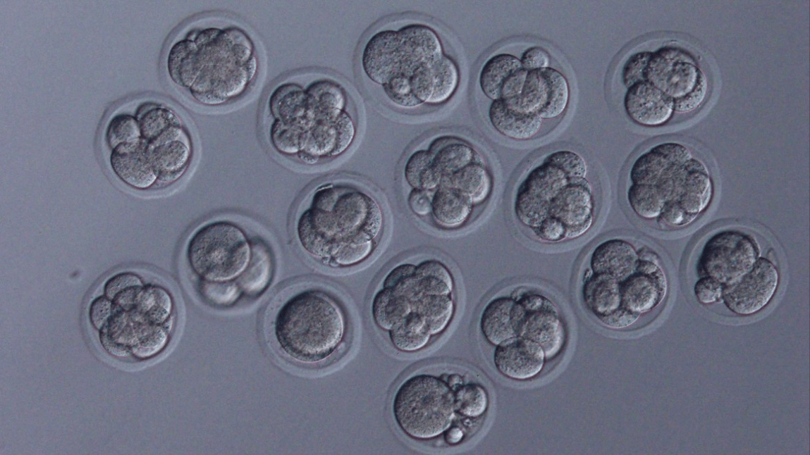 Embryos derived from sperm that were frozen in space