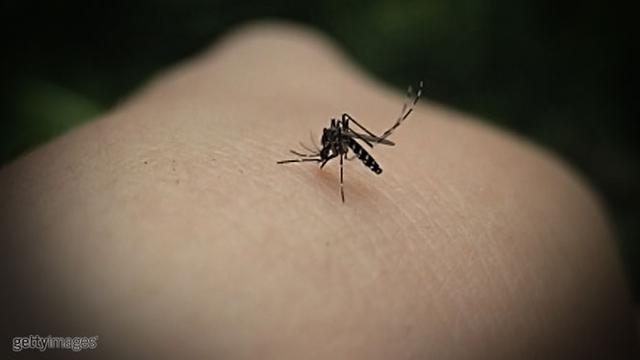 Bisakah Nyamuk yang Gigit Penderita HIV Menularkan Juga HIV ...