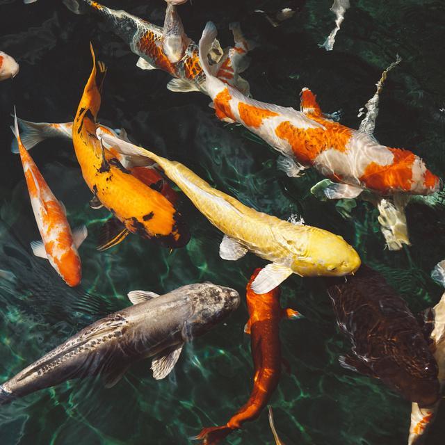 Ciri Ciri Ikan Klasifikasi Dan Habitatnya Ketahui Secara Dalam Citizen6 Liputan6 Com