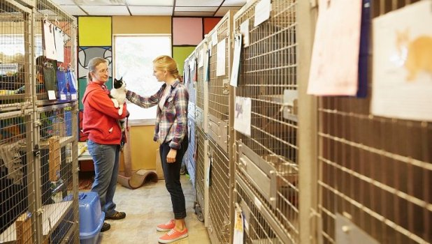 Two volunteers hold and pet a cat in an animal shelter.