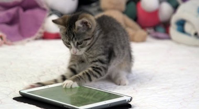 Cats Playing On An iPad And Why They Should  CatTime