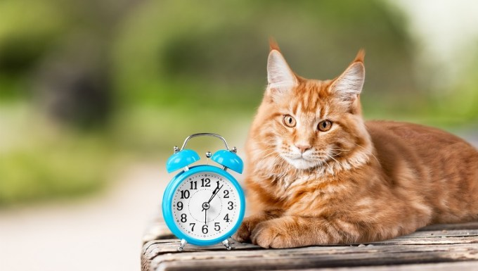 Adorable red cat with clock on table
