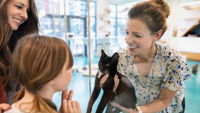 Cat being adopted