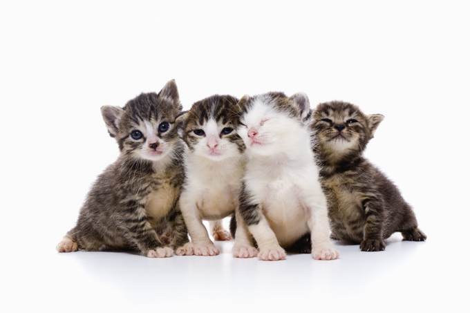 21 Cat Facts To Share With Kids