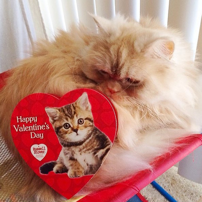 Exotic Animal Wallpaper Cats Who Want To Be Your Valentine For Valentine S Day