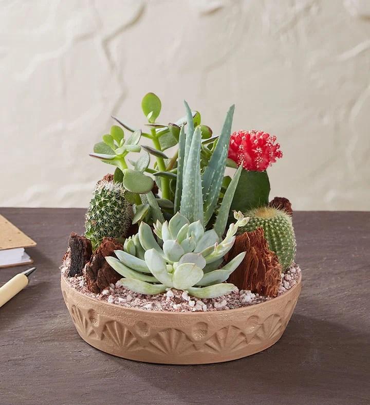 Cactus Dish Garden Growing Succulents Plants How To
