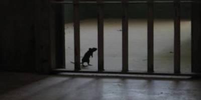 Βαπορακι,Φυλακες,Βραζιλιας,Συμπαθης,Χαρακτηρας,Γνωστος