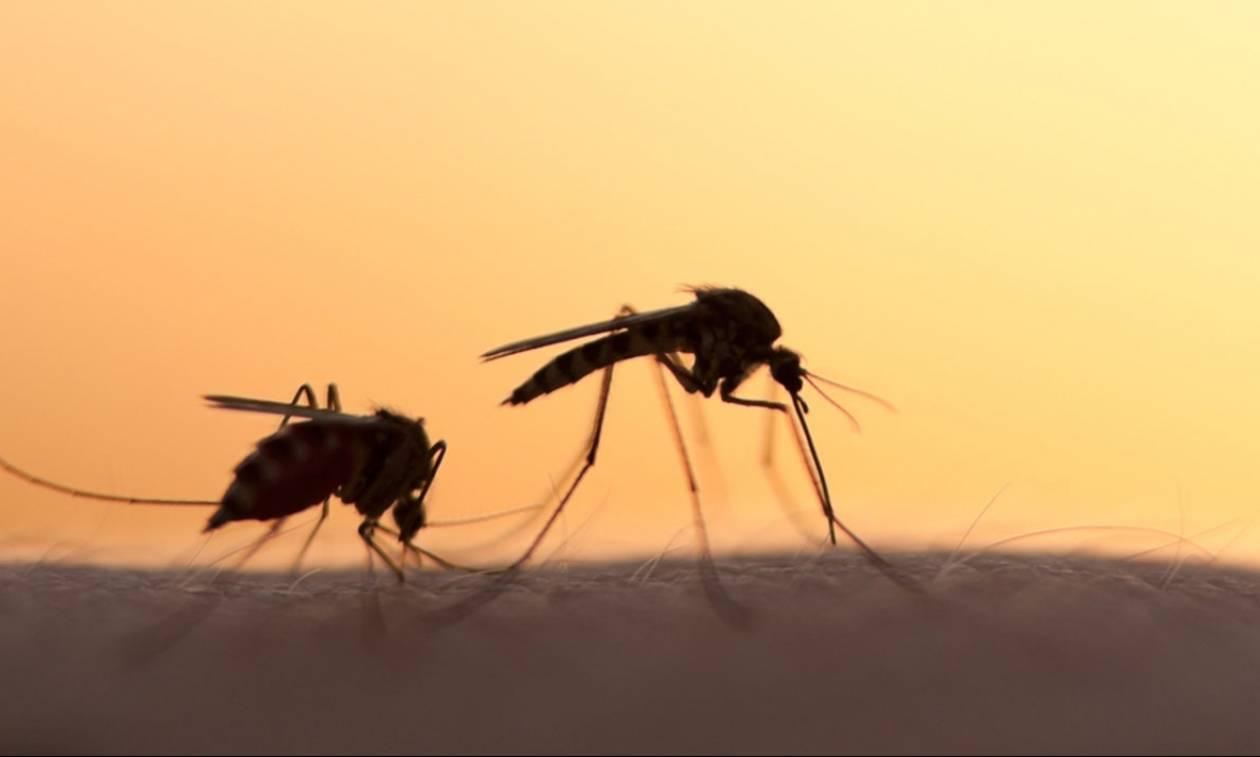 Αποτέλεσμα εικόνας για κουνουπια