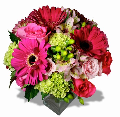 hawt pink gerbera greetings
