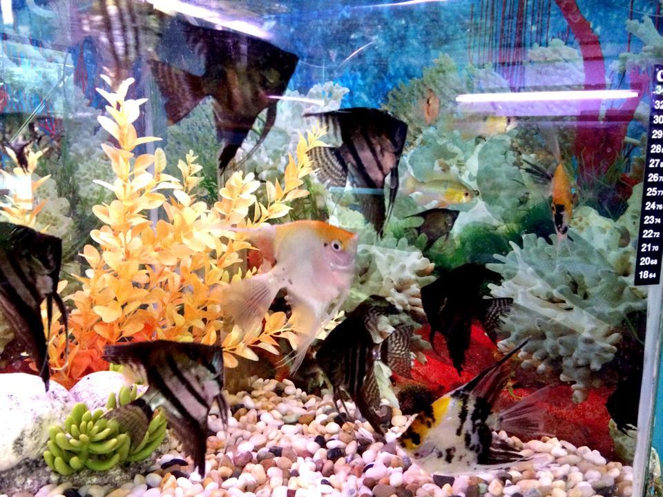 Dos & Don?ts of Fish Keeping! Pet Zone Tropical Fish