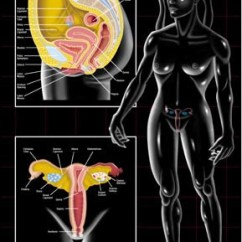Chairs In Bulk Wooden Childrens Rocking Chair Female Reproductive System Poster - Clinical Charts And Supplies