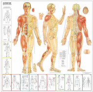 Acupuncture chart also educational posters at clinicalcharts rh