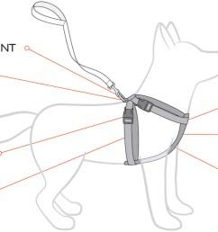 chestplate diagram2 jpg [ 1334 x 634 Pixel ]