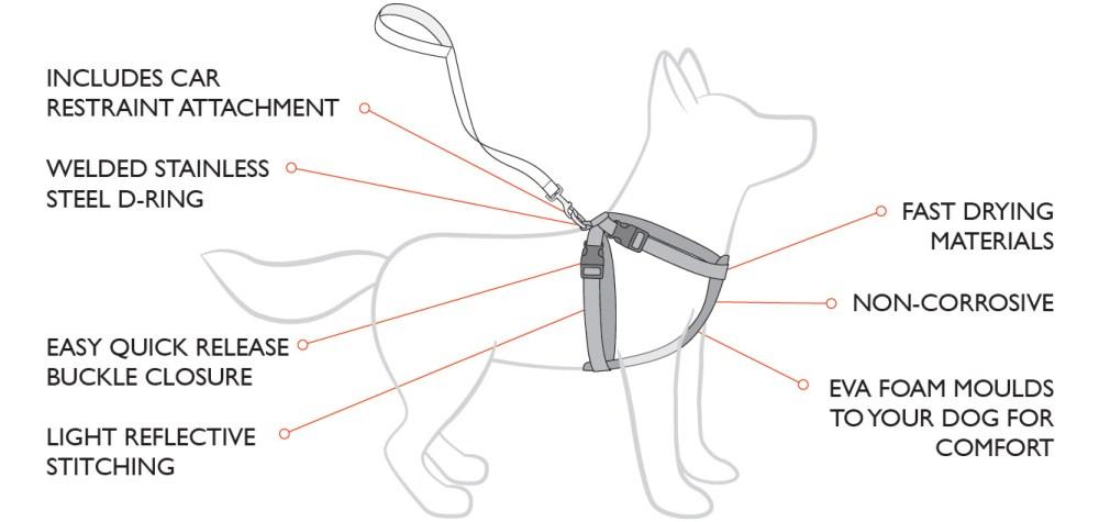 medium resolution of chestplate diagram2 jpg