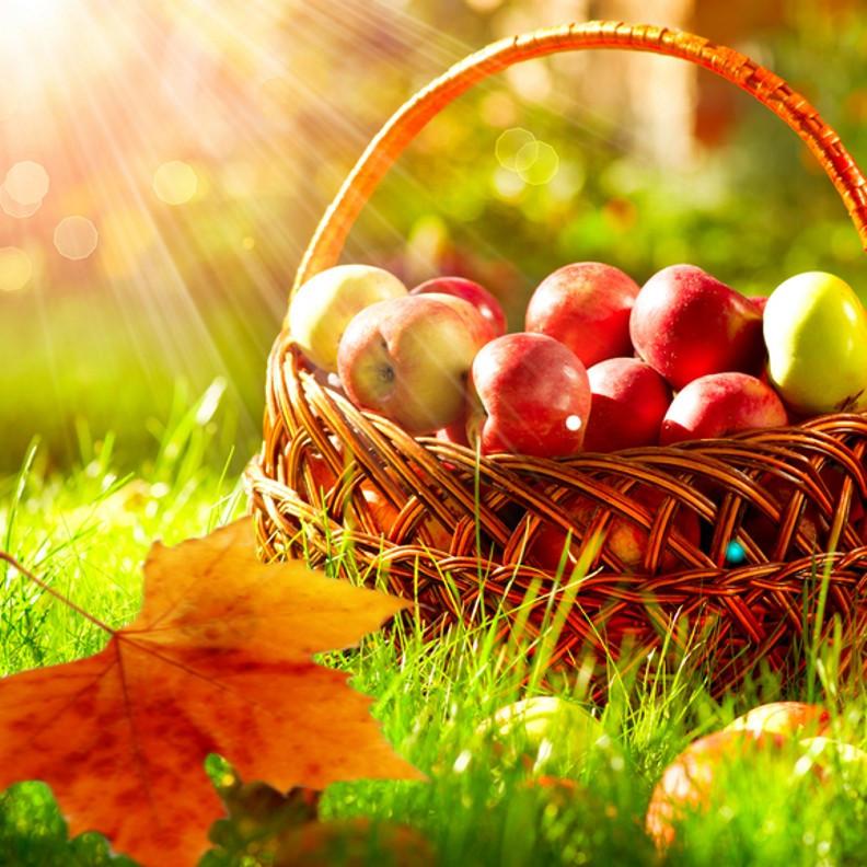 Free Fall Harvest Desktop Wallpaper Autumn And Apple Orchard Fragrance Oil