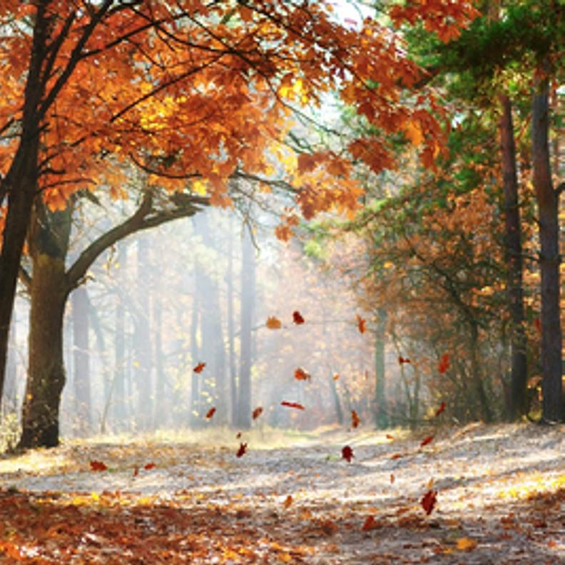 Autumn Falling Leaves Wallpaper Falling Leaves Fragrance Oil