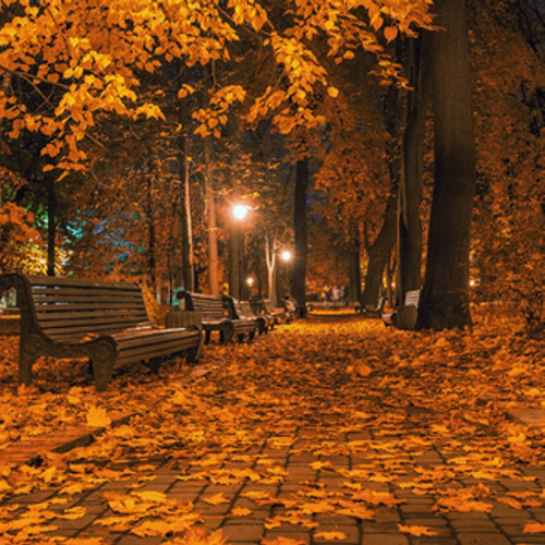 Tree With Leaves Falling Wallpaper Autumn Night Type Fragrance Oil The Flaming Candle Company
