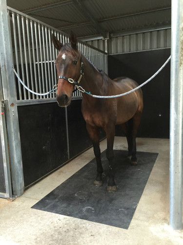 Wash Bay  Cross Ties flooring  Snaffleit Horse Supplies