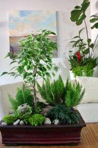 Combining Houseplants for Decorative Arrangements - Zillow ...