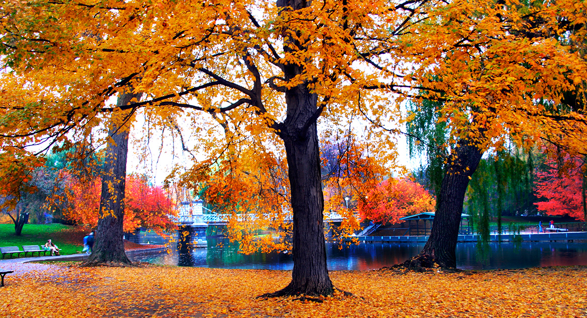 Hd Wallpaper Fall Leaf Change This Year Was Boston S Second Warmest October Ever
