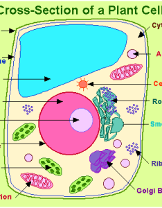 Plant cell also important biology diagrams from all chapters for cbse class rh byjus