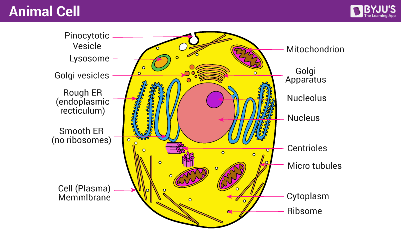 Diagram Of Cell Structure