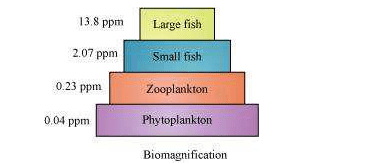 NCERT Solutions For Class 12 Biology Chapter 1 Reproduction in Organisms 45