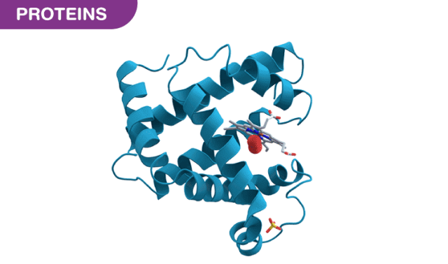 The Basics of Protein - Its Structure and Functions