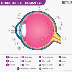 Structure Of Human Eye With Diagram Vrcd400 Sdu Wiring 2 Parts The Cornea Sclera Lens