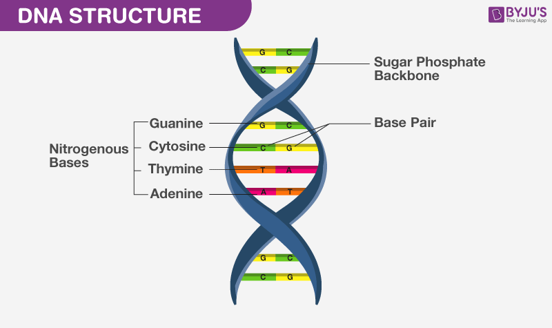 dna structure what is