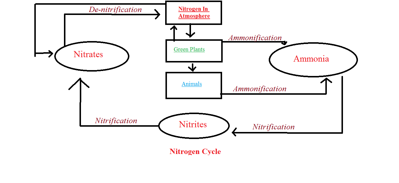 RBSE Solutions For Class 12 Biology Chapter 12: Nitrogen