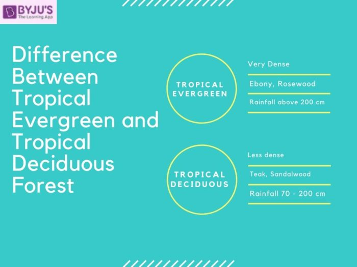 Tropical trees can be grown indoors to add height or soften the corners of a room. Difference Between Tropical Evergreen And Tropical Deciduous Forest In India Their Comparisons For Upsc