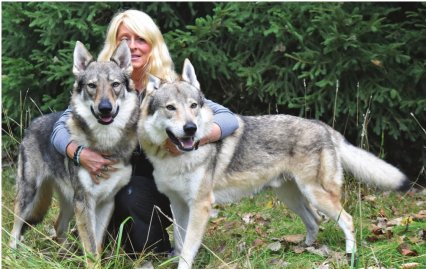 Meet Mikey, Lansing's Czechoslovakian wolfdog superstar | City Pulse