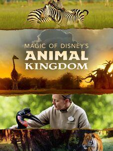 Animal Kingdom Saison 3 Streaming : animal, kingdom, saison, streaming, Watch, Heartland, Docs,, Streaming, Online
