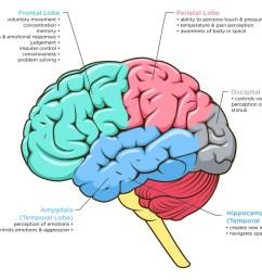 brain image 2 ana jpg [ 1000 x 873 Pixel ]