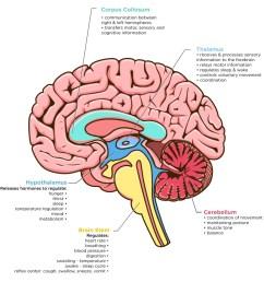 brain image ana jpg [ 1000 x 1000 Pixel ]
