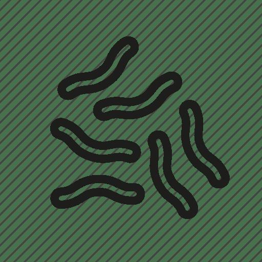 Bacteria, biology, cell, germ, microorganism, virus icon