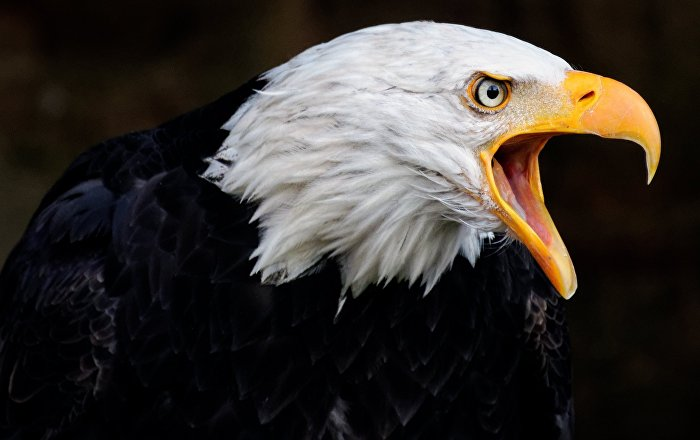 Eagles Capturing Drones Dangerous and Stupid Experts