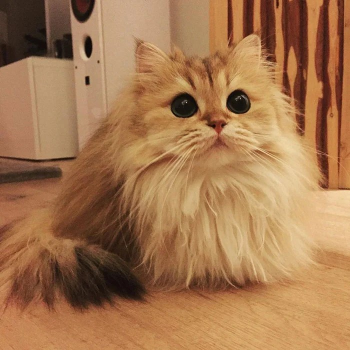 gato_fotogenico_3