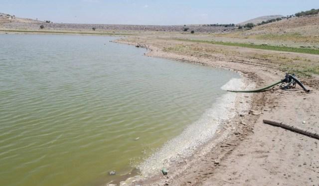 May Barajı'nda korkutan görüntü: Sular çekildi, binlerce balık telef oldu - 12