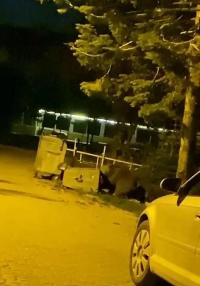 Uludağ'da aç kalan ayılar kamp alanına indi - 4
