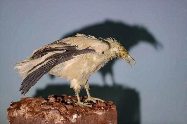 Van'da yaban hayvanları tahnit sanatıyla müzede tanıtılacak - 39