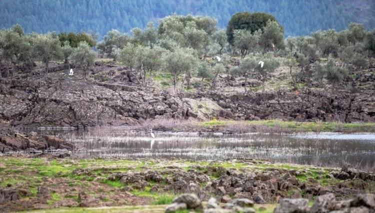 Hatay'da volkanik Haydarlar Gölü göçmen kuşlara ev sahipliği yapıyor