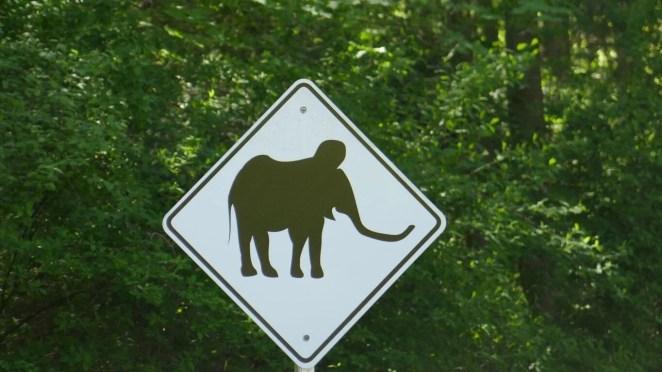 10 bin yıl önce yok olan yünlü mamutlar yeniden doğacak - 4