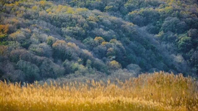 Yaban hayatı, sonbahar renklerinde görüntülendi - 9