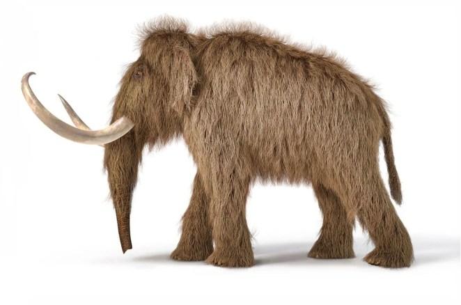 10 bin yıl önce yok olan yünlü mamutlar yeniden doğacak - 10