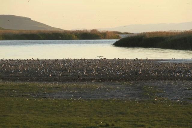 Bilim insanlarından uyarı: Göllerdeki oksijen seviyesi son 40 yılda hızla azaldı - 2