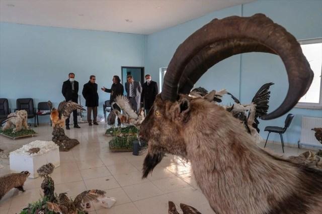 Van'da yaban hayvanları tahnit sanatıyla müzede tanıtılacak - 21
