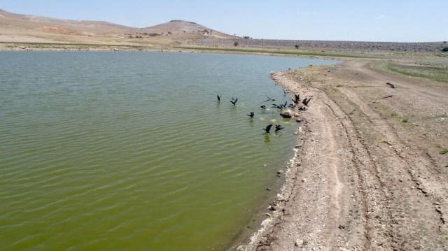 May Barajı'nda korkutan görüntü: Sular çekildi, binlerce balık telef oldu - 8